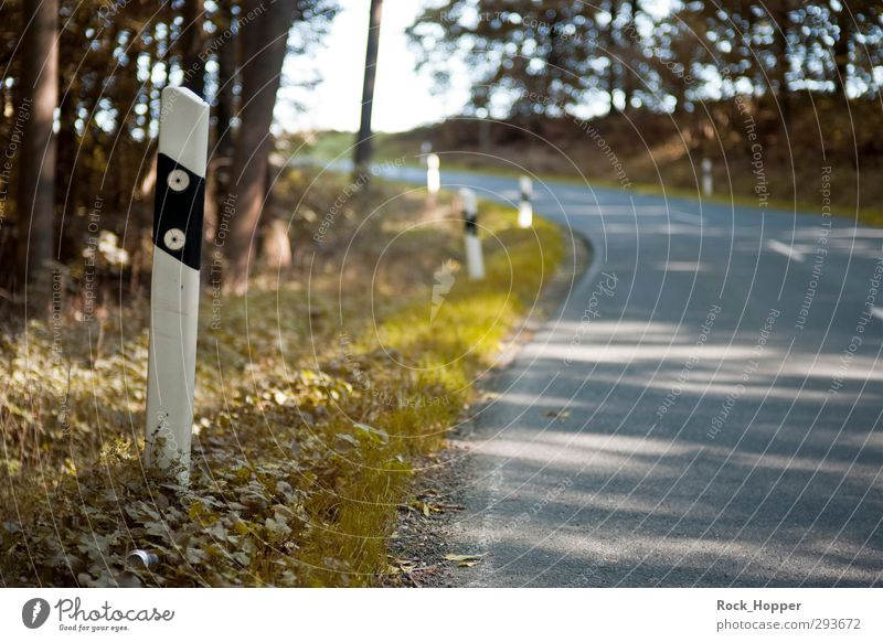 Straße bergauf Umwelt Natur Pflanze Herbst Schönes Wetter Baum Gras Grünpflanze Wald Hügel Mittelgebirge Verkehr Verkehrswege Autofahren Fahrradfahren