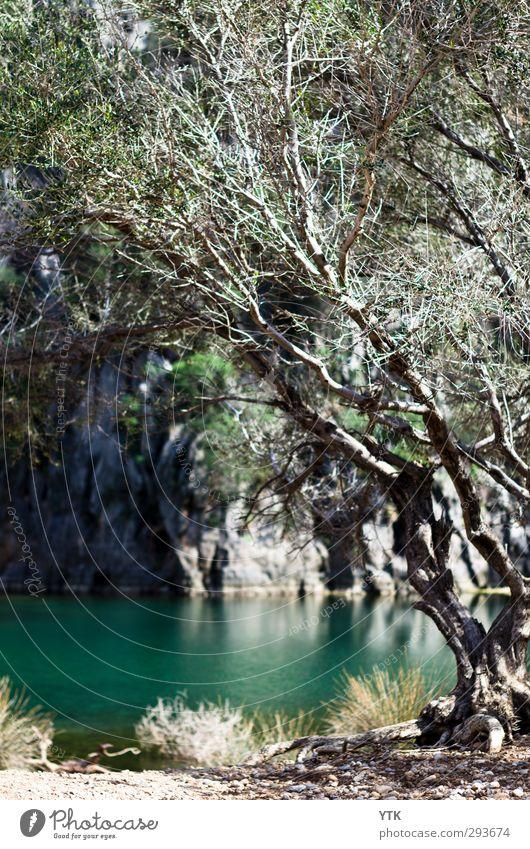 Oh so blue Natur alt Wasser Sommer Pflanze Baum Sonne Landschaft Blatt Wald Umwelt Berge u. Gebirge Gras Sand Felsen natürlich