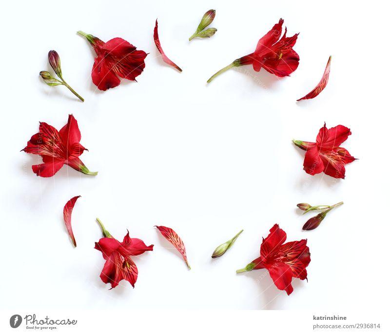 Frau rot Blume Erwachsene Textfreiraum oben Design Dekoration & Verzierung Kreativität Hochzeit Mutter Entwurf Valentinstag Muttertag geblümt Engagement