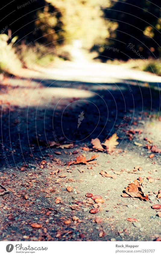 Eichelweg Ausflug wandern Joggen Umwelt Natur Pflanze Erde Sand Herbst Baum Grünpflanze Eicheln Eichenblatt Park Wald Hügel Berge u. Gebirge Mittelgebirge