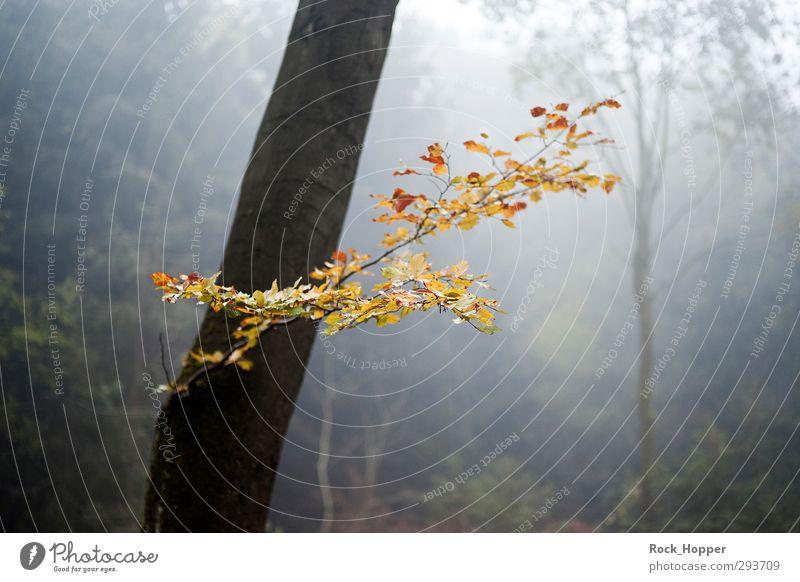 Herbstlaub im Nebel harmonisch ruhig Umwelt Natur Pflanze Baum Sträucher Blatt Baumstamm Ast Baumrinde Wald Hügel Berge u. Gebirge Mittelgebirge Wege & Pfade