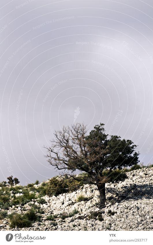 Lone Tree Umwelt Natur Landschaft Pflanze Urelemente Erde Luft Himmel Wolken Sommer Klima Wetter schlechtes Wetter Baum Gras Sträucher Grünpflanze Wildpflanze