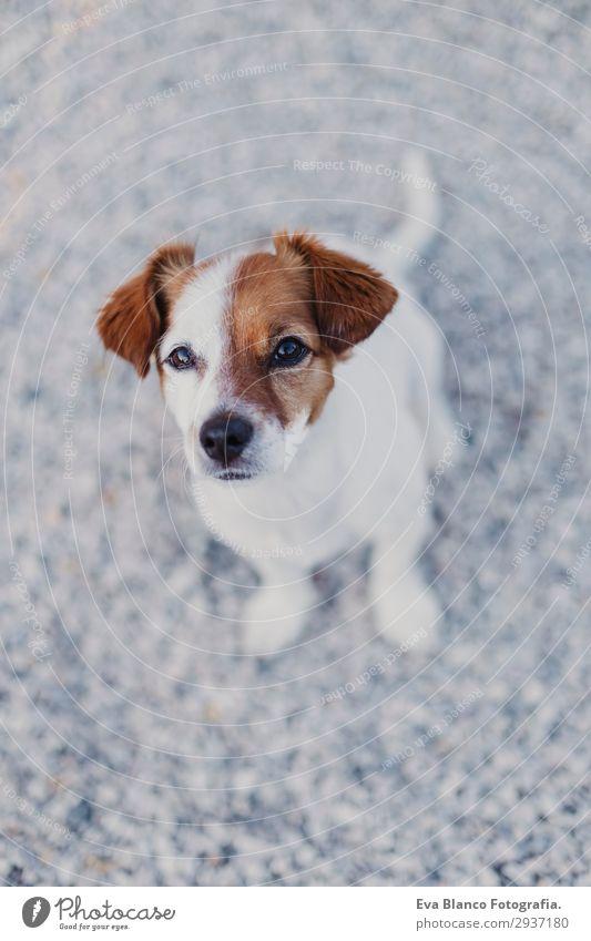 Hund Jugendliche Sommer schön weiß Tier Freude schwarz Lifestyle lustig Glück klein Spielen Freundschaft elegant Lächeln