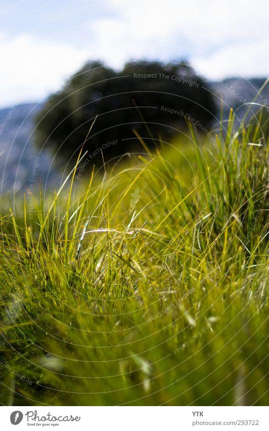 In the grass Umwelt Natur Landschaft Pflanze Urelemente Luft Himmel Wolken Klima Klimawandel Wetter schlechtes Wetter Baum Gras Sträucher Blatt Blüte