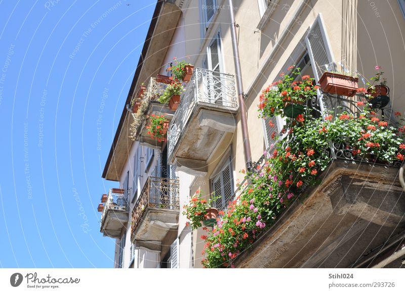 Bella Italia Stil harmonisch Sommer Wohnung Wolkenloser Himmel Stadt Como Italien Altstadt Haus Gebäude Fassade Balkon Balkonpflanze Blumenkasten Blühend
