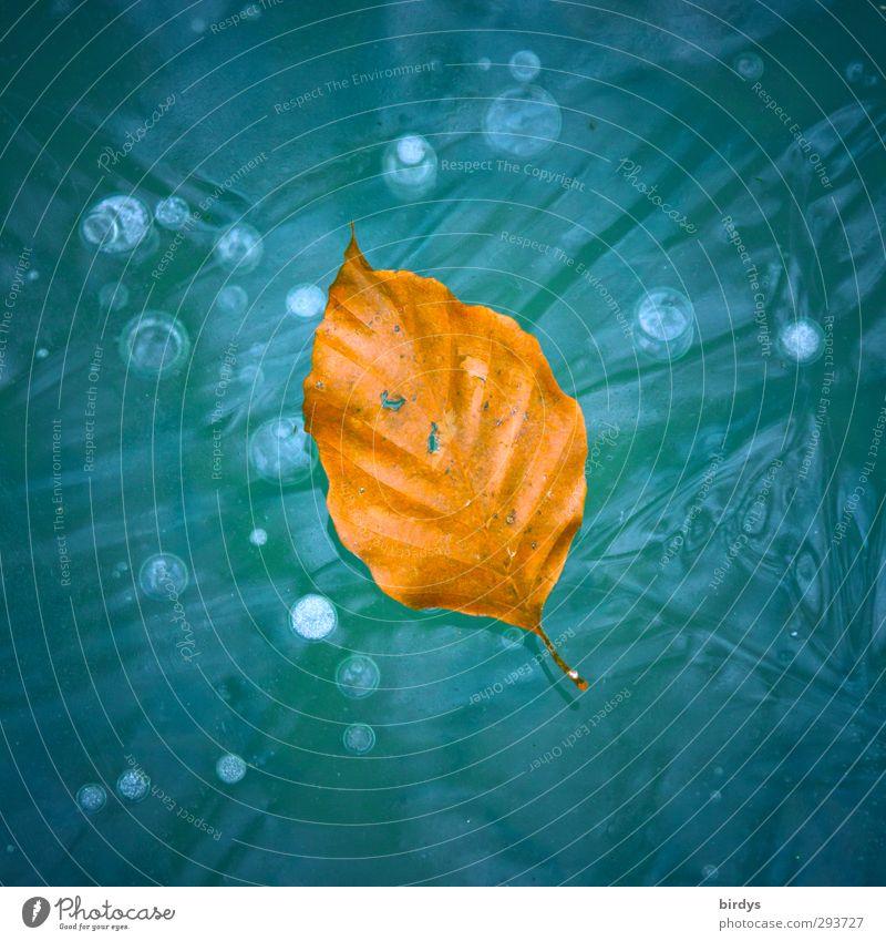 altersbedingt schön Herbst Winter Schönes Wetter Eis Frost Blatt Buchenblatt Herbstlaub Eisfläche liegen Freundlichkeit hell positiv blau orange Senior
