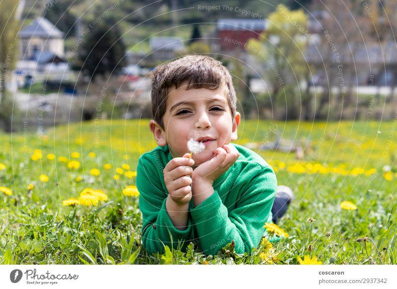 Süßer kleiner Junge, der auf einem Feld liegt. Lifestyle Freude Glück schön Gesicht Freizeit & Hobby Spielen Ferien & Urlaub & Reisen Tourismus Sommer Sonne