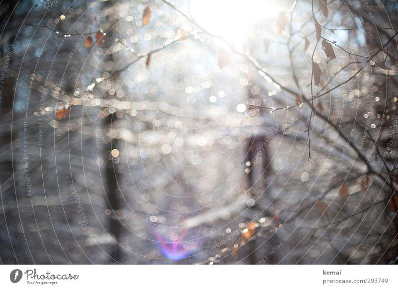 Licht Umwelt Natur Pflanze Wasser Wassertropfen Schönes Wetter Eis Frost Baum Sträucher Blatt Ast Zweig Wald hängen hell glänzend Blendenfleck flirren