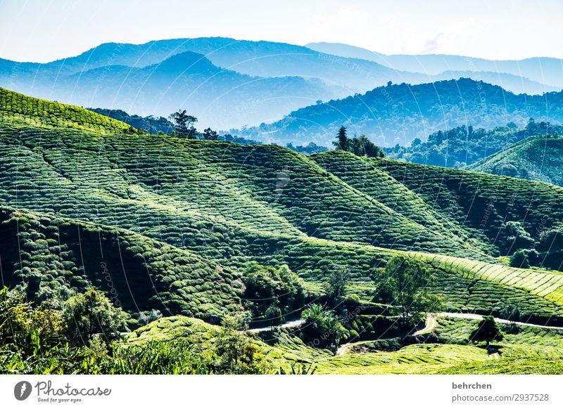 wunschtee für... Himmel Ferien & Urlaub & Reisen Natur Pflanze blau grün Landschaft Baum Blatt Ferne Berge u. Gebirge Umwelt Tourismus außergewöhnlich Freiheit