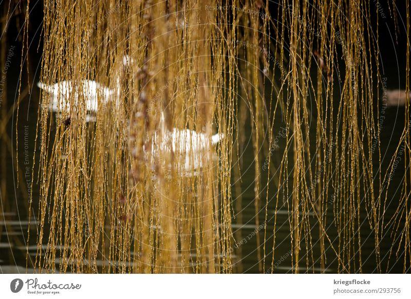 100% Naturvorhang Wasser Pflanze Baum Tier ruhig Erholung Umwelt Schwimmen & Baden elegant Idylle Sicherheit Ast Fluss Schutz verstecken
