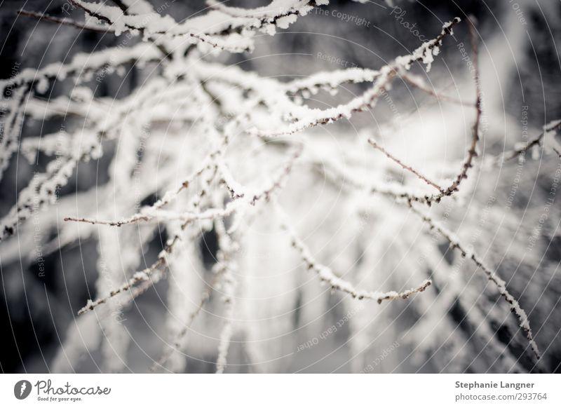 Schnee, der auf... Zweige fällt Natur Pflanze Landschaft ruhig Winter Umwelt Eis Wetter Sträucher Ast Frost frieren