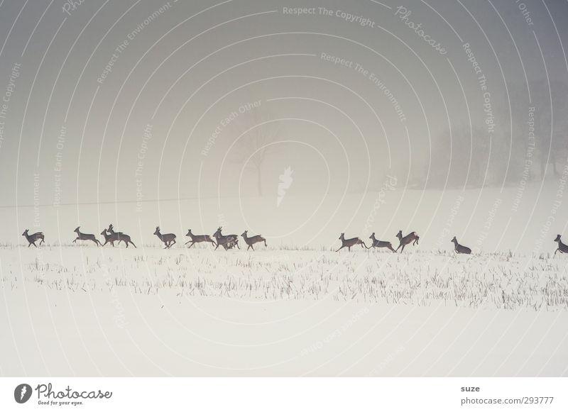 Rehinkarnation Jagd Umwelt Natur Landschaft Tier Urelemente Himmel Wolkenloser Himmel Winter Nebel Schnee Feld Wildtier Tiergruppe Herde rennen authentisch kalt