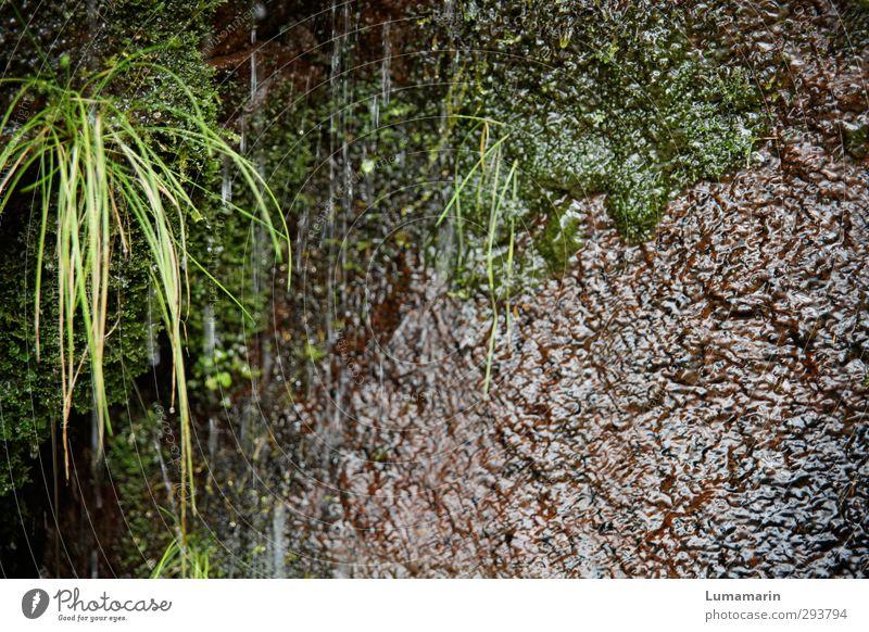öko Umwelt Natur Pflanze Urelemente Erde Wasser Wassertropfen Gras Moos nass natürlich grün rein Umweltschutz Wachstum rieseln feucht Rinnsal ökologisch Biotop