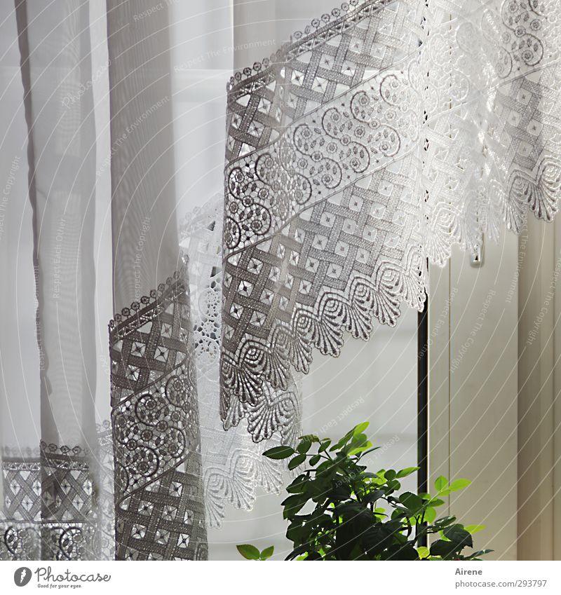 kleines Grün und zartes Weiß (Begegnung) Wohnung Innenarchitektur Dekoration & Verzierung Fensterbrett Pflanze Blatt Grünpflanze Gardine Vorhang Spitzengardine