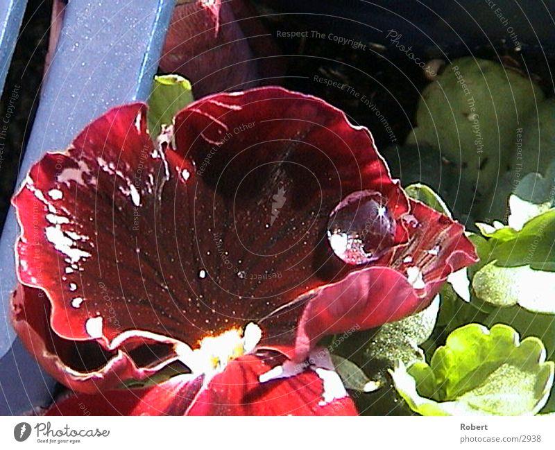 Blumen und Tropfen Blumenkasten Wassertropfen Erde