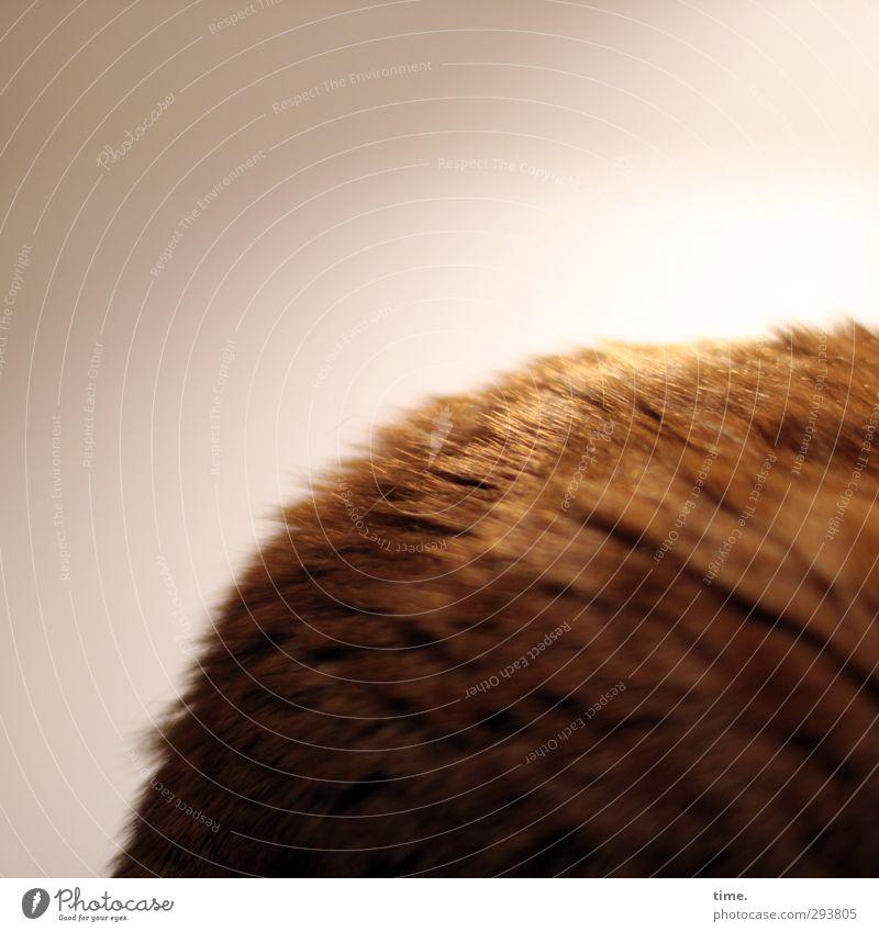 Rrrraubtierrrrr Katze Tier ruhig Erholung Leben träumen Stimmung liegen blond Zufriedenheit Ordnung Energie Perspektive genießen rund Fell