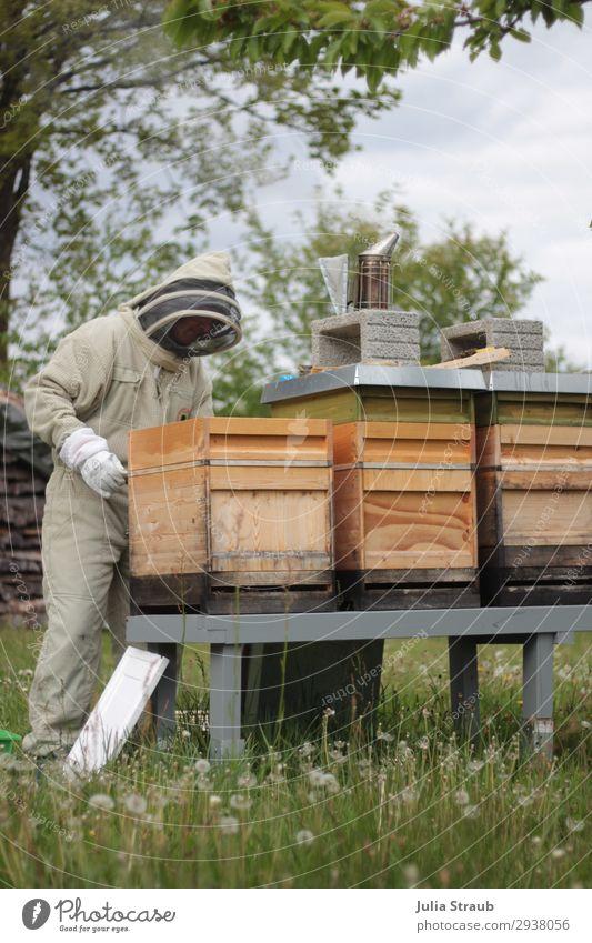 Bienenstand Imkern Wiese maskulin 1 Mensch 30-45 Jahre Erwachsene Natur Sommer Baum Gras beobachten Bewegung Blick grün Klima Bienenstock Imkerschleier