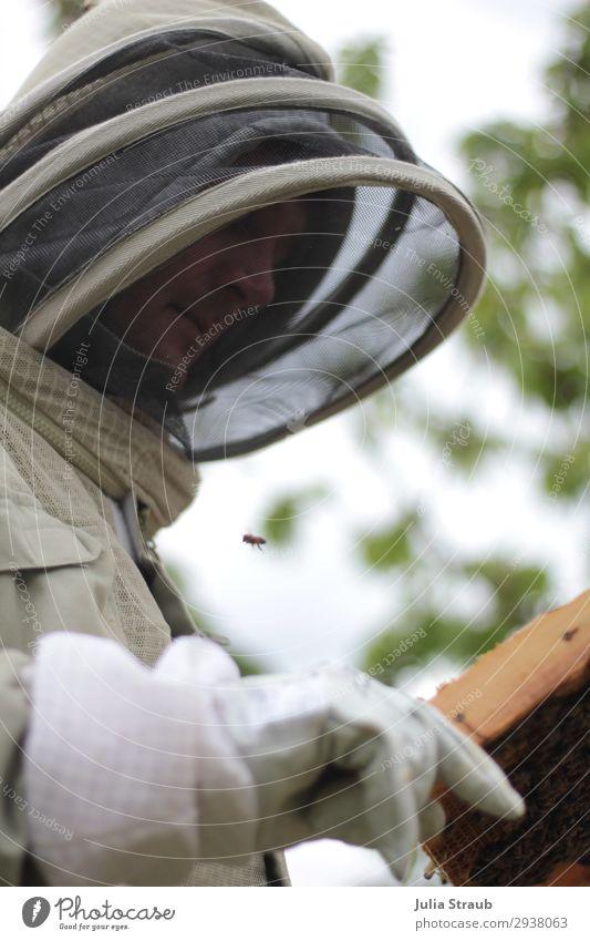 Imker Imkerschleier Anzug Bienen Mensch maskulin 1 30-45 Jahre Erwachsene beobachten außergewöhnlich Handschuhe Schutzbekleidung Kontrolle Farbfoto