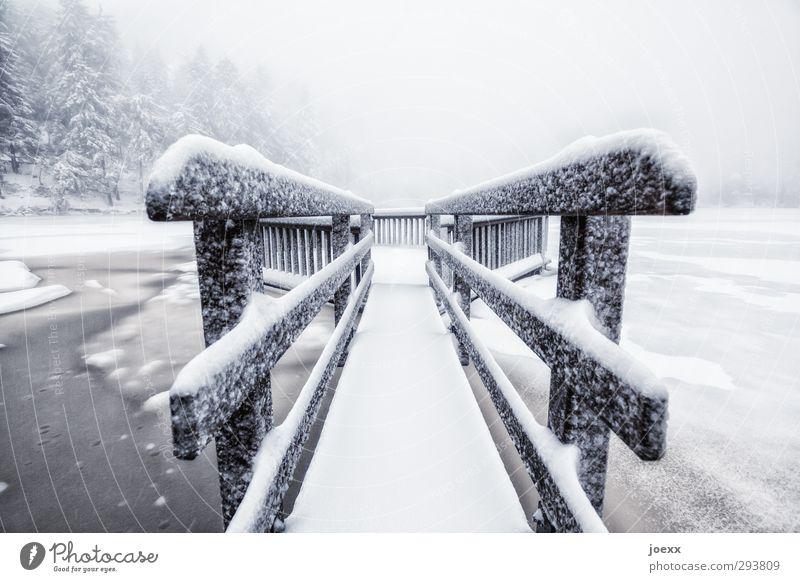 Phobia Natur Winter Wetter schlechtes Wetter Eis Frost Schnee Park Wald See schwarz weiß Angst kalt Wege & Pfade Farbfoto Gedeckte Farben Außenaufnahme