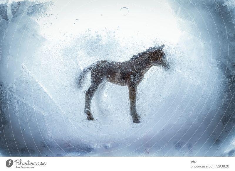 kaltblüter Pferd bizarr tiefgekühlt Eis Frost falsches Rindfleisch Ernährung betrügen Skandal pferdefleisch Fleisch Fleischgerichte Fleischskandal Kühlhaus