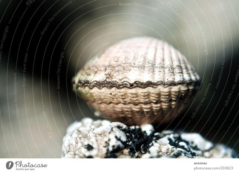 Tresor Natur Meer Tier Strand grau Küste Muschel Tresor