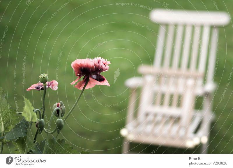 ich kann es kaum erwarten.. Zufriedenheit Erholung ruhig Garten Frühling Blume Blüte Mohn Blütenknospen Wiese Blühend authentisch Wärme grün Lebensfreude