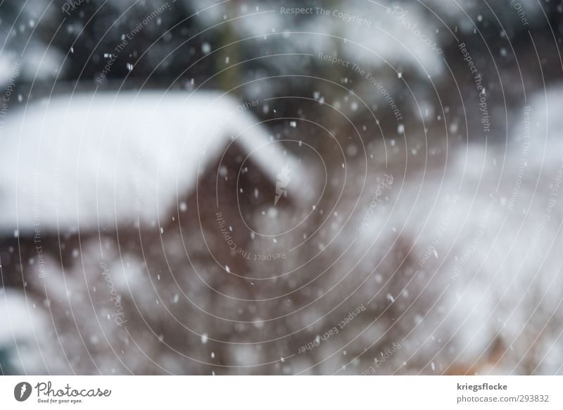 Schneeflöckchen Tourismus Winter Winterurlaub Natur Wetter Eis Frost Schneefall Dorf Hütte Garten kalt Vorfreude Sehnsucht Heimweh Einsamkeit Frieden Idylle