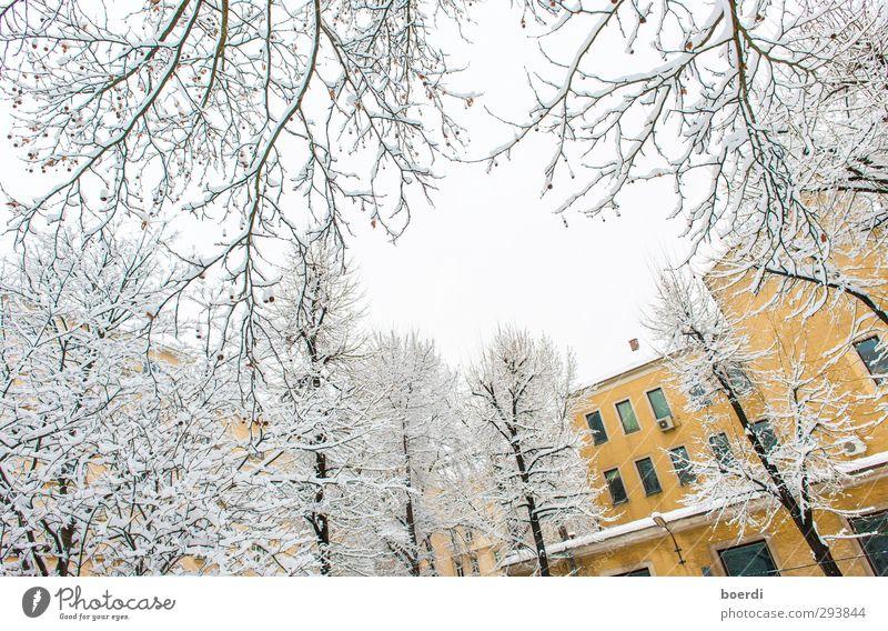 Winter im Winter in der Stadt Umwelt Nebel Eis Frost Schnee Baum Fassade kalt schön gelb weiß ruhig Idylle Farbfoto Außenaufnahme Tag Froschperspektive