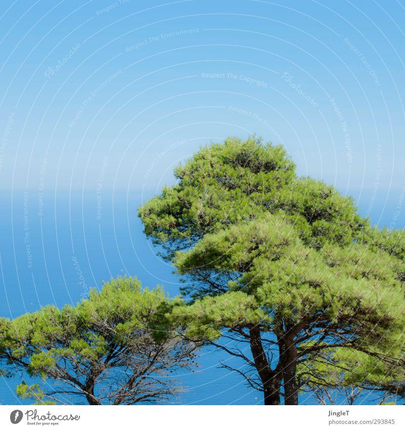 seHnSUchT Natur blau Ferien & Urlaub & Reisen grün Sommer Pflanze Baum Meer Landschaft Umwelt Ferne Freiheit Glück braun träumen Wetter