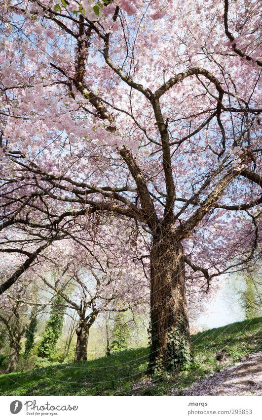 Park Natur schön Pflanze Baum Landschaft Wiese Leben Frühling hell Stimmung frisch Schönes Wetter ästhetisch Vorfreude Kirschblüten