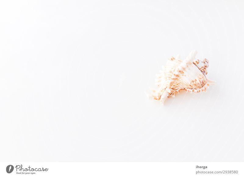 Muscheln. Draufsicht mit Kopierbereich. Design Ferien & Urlaub & Reisen Tourismus Ausflug Sommer Sommerurlaub Sonne Strand Meer Insel Wellen Tapete Natur Sand