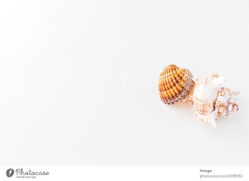 Muscheln. Draufsicht mit Kopierbereich. Design Ferien & Urlaub & Reisen Tourismus Ausflug Sommer Sonne Strand Meer Tapete Natur Sand Küste natürlich Sauberkeit