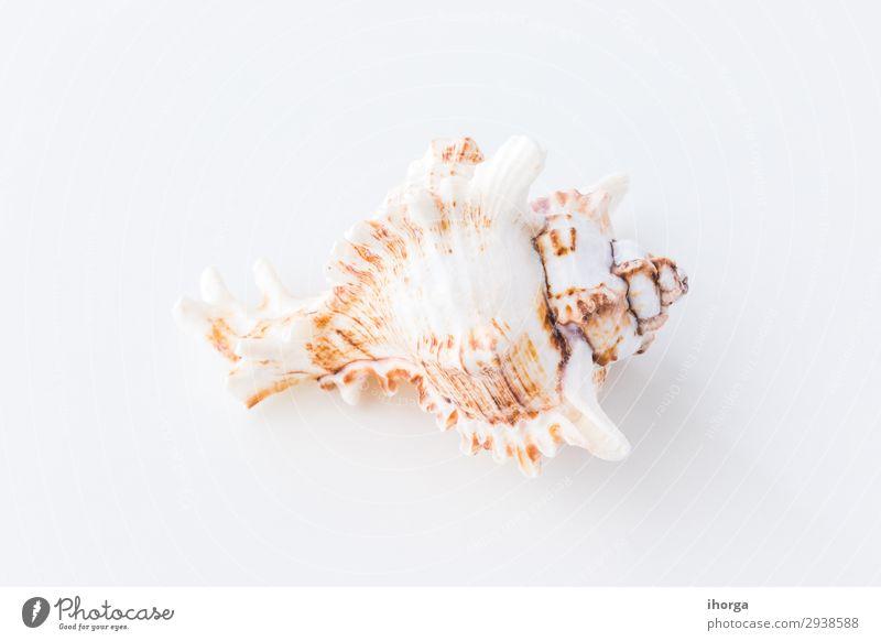 Muscheln. Draufsicht mit Kopierbereich. flach Hintergrund Strand beige Sauberkeit Nahaufnahme Küste Konzept copyspace Design Detailaufnahme Rahmen Feiertag