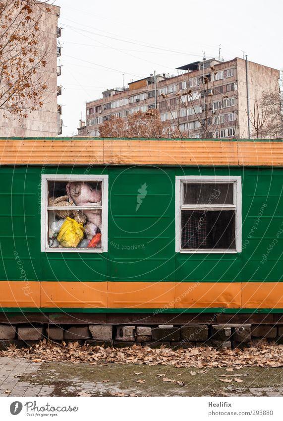 Economy vs. First Class Spielen Stofftiere Garten Baum Blatt Park Hochhaus Fassade Fell Tiger Bär Container Häusliches Leben Armut dreckig dunkel hässlich kalt
