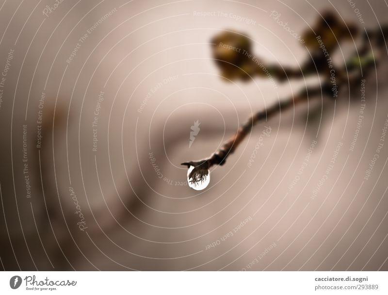 only one drop Pflanze Einsamkeit Ferne dunkel Herbst Traurigkeit grau braun Regen Wetter nass Sträucher Wassertropfen einfach Vergänglichkeit Hoffnung