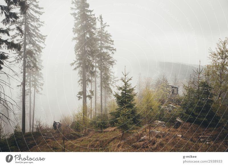 Wald im Nebel Natur schlechtes Wetter Berge u. Gebirge Riesengebirge entdecken wandern frei Tapferkeit Mut Schutz ruhig Traurigkeit Nadelwald Hochsitz Nebelwald
