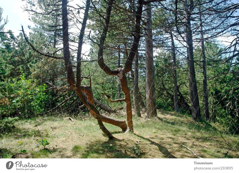 Fighting Trees Natur Ferien & Urlaub & Reisen grün Pflanze Baum Wald Umwelt Gefühle Gras natürlich authentisch Ausflug Sträucher kämpfen Aggression Dänemark