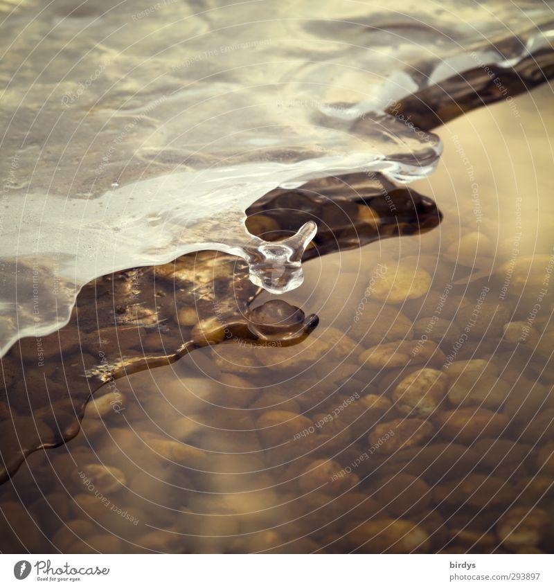 transformierte Duplizität Natur Wasser schön Winter ruhig kalt natürlich Eis glänzend Klima elegant ästhetisch Wandel & Veränderung Frost frieren Originalität