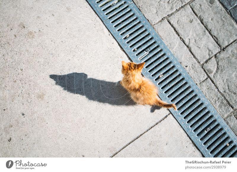 Miau Tier Katze 1 grau orange weiß Schatten Schattenspiel kleine katze Hauskatze Kontrast Silhouette Spielen Neugier Streicheln Schwanz Ohr Farbfoto