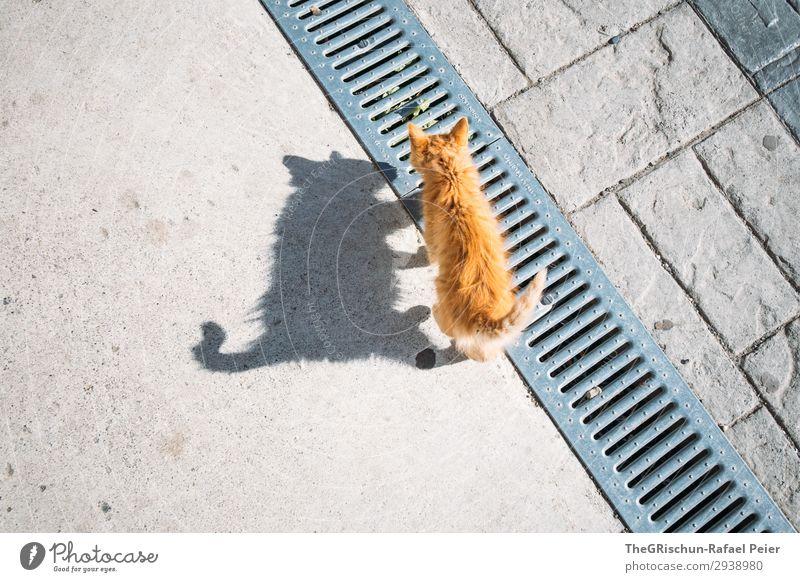 Katze Tier 1 braun orange schwarz Tierjunges Schatten Schattenspiel Licht Spielen ästhetisch Neugier Schwanz laufen Farbfoto Außenaufnahme Menschenleer