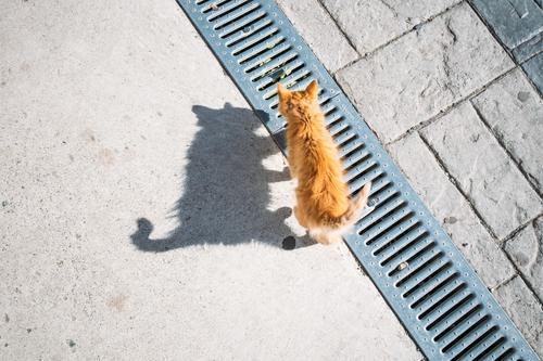 Katze Tier schwarz Tierjunges Spielen orange braun ästhetisch laufen Neugier Schwanz Schattenspiel