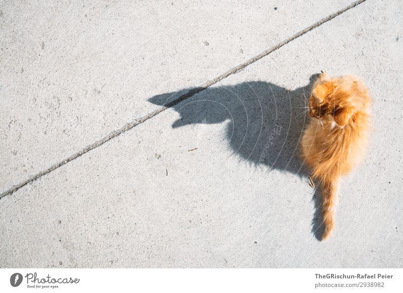 Katze Tier 1 grau orange Hauskatze Miau sitzen Spielen Schatten Beton Ohr Silhouette Kontrast Licht Behaarung Farbfoto Außenaufnahme Menschenleer