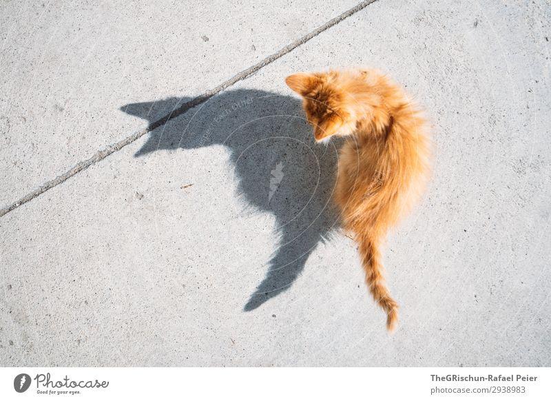 Büsi Tier Katze 1 grau orange Hauskatze Schatten Schattenspiel Kontrast Beton Vogelperspektive Ohr Schwanz Spielen Tierjunges Silhouette Licht haarig Farbfoto