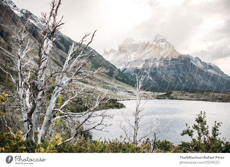 Torres del Paine - NP Umwelt Natur Landschaft braun schwarz weiß Torres del Paine NP See wandern Wald Waldbrand Tod ästhetisch Patagonien Wind unbeständig Chile
