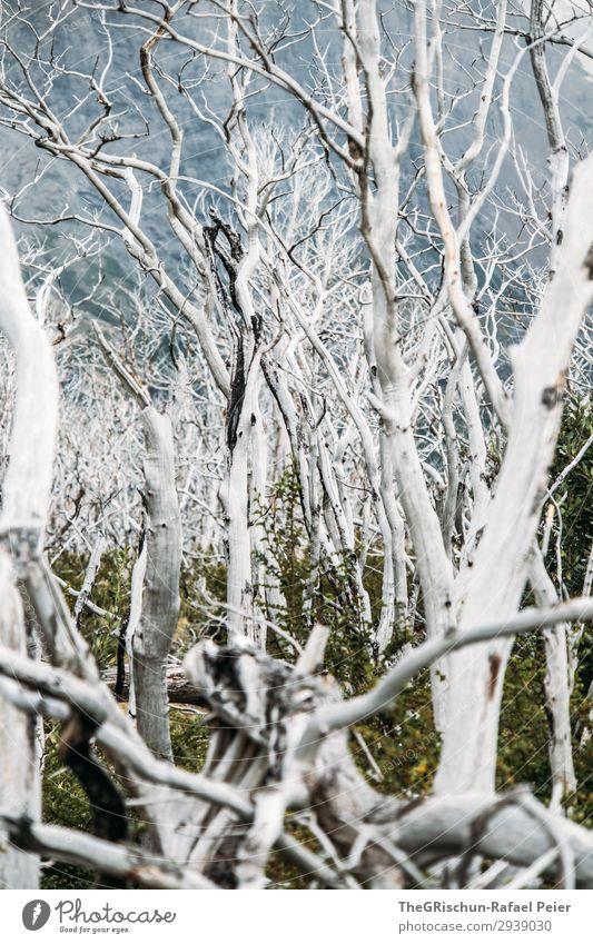 Geisterwald Umwelt Natur Landschaft alt ästhetisch weiß Wald schön bedrohlich Tod neues leben Patagonien Chile Torres del Paine NP Tourismus wandern verbrannt