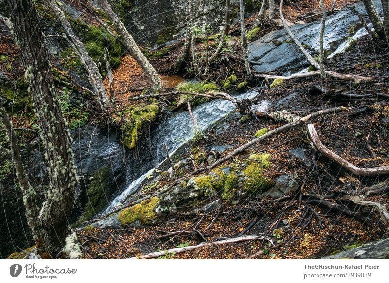 Wasserfall Natur grün Baum Moos bewachsen Felsen fließen Wurzelgemüse Nationalpark Patagonien Farbfoto Außenaufnahme Menschenleer Textfreiraum oben