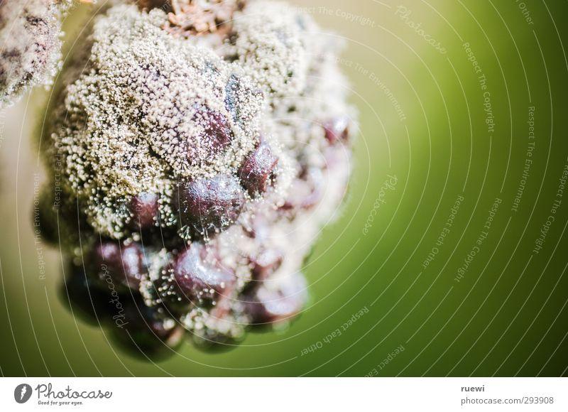 bon appétit Lebensmittel Frucht Brombeeren Ernährung Vegetarische Ernährung Gesundheit Allergie Garten Erntedankfest Gartenarbeit Landwirtschaft Forstwirtschaft