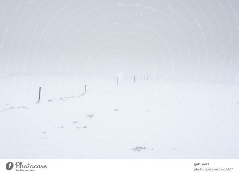 Winter adé Landschaft Horizont Wetter schlechtes Wetter Eis Frost Schnee Wiese Feld kalt trist weiß ruhig Einsamkeit Ende Irritation Wege & Pfade