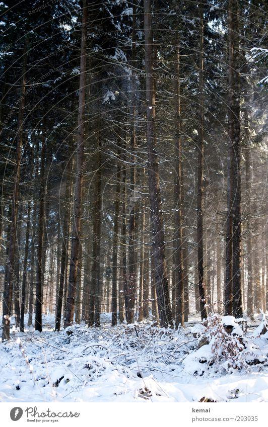 Im Wald, da ist der Schnee Umwelt Natur Landschaft Sonne Sonnenlicht Winter Schönes Wetter Eis Frost Pflanze Baum Nadelwald Ast Zweig groß viele gerade Linie