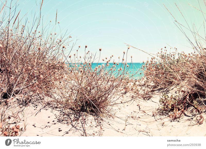 Hinter der Düne Ferien & Urlaub & Reisen Tourismus Ausflug Freiheit Umwelt Natur Landschaft Pflanze Sand Wasser Himmel Küste Strand Meer Blick Schwimmen & Baden